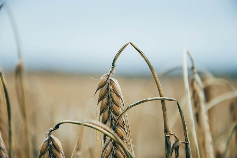 Токсична проблема: екологи закликають до євростандартів у поводженні зпестицидами