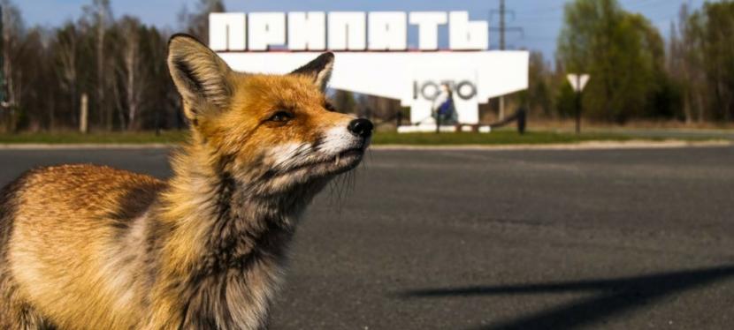 Як Україна прогнозує радіаційні загрози завдякиЄС