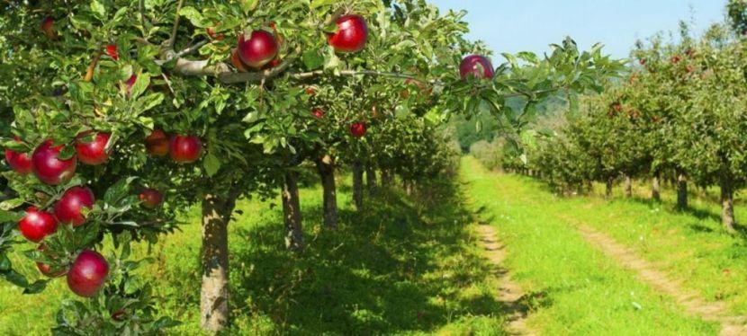 ЄС фінансує садово-туристичний кластер наВінниччині