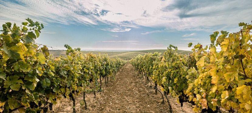 ЄС підтримує виноробство уЗакарпатті